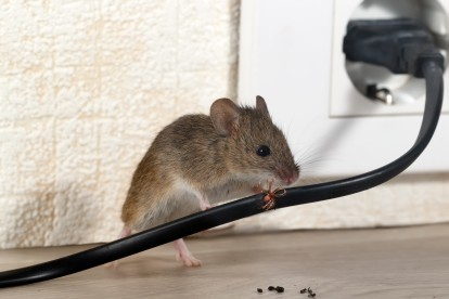 Pest Control in Northolt, UB5. Call Now! 020 8166 9746