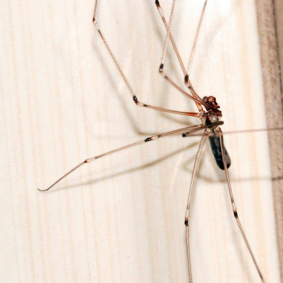 Spiders, Pest Control in Northolt, UB5. Call Now! 020 8166 9746